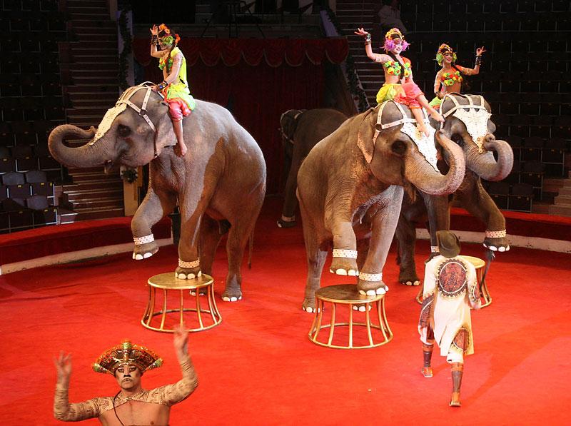 отличается картинки артисты цирка животные детям благодарностью